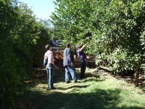 El Ignacio mission garden 051 (2)